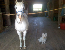 White horse and dog